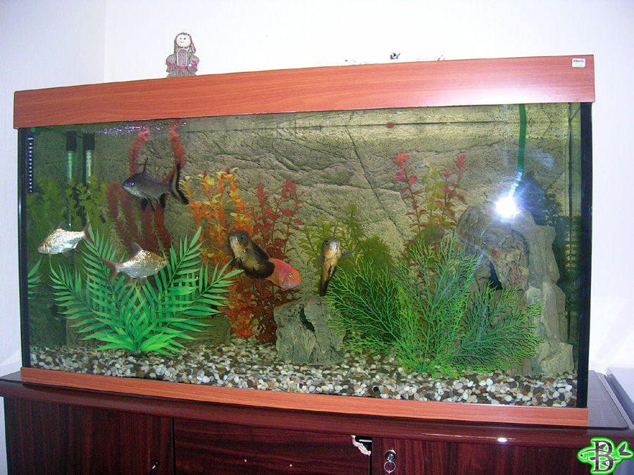 Оформление аквариума видео своими руками